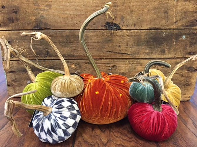 Velvet pumpkins are a favorite holiday accessory of Courtney Thomas of The Picket Fence in Burke.