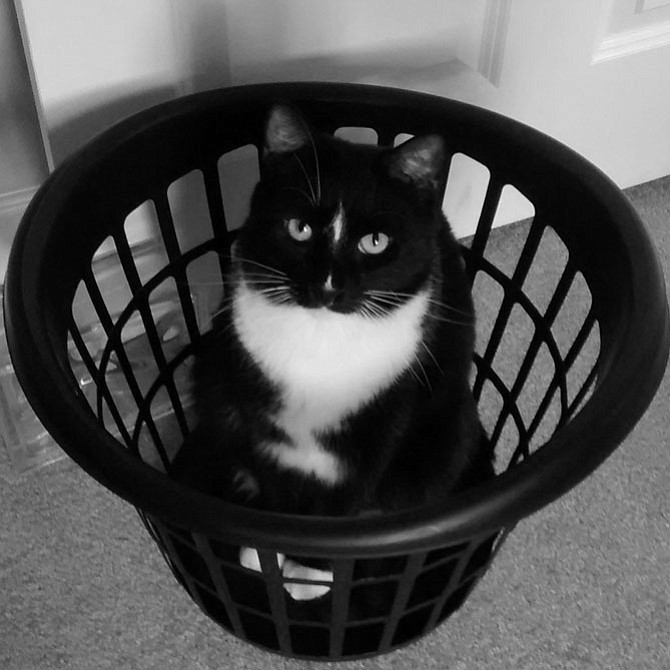 This is Roger and he likes to help with the laundry — which really consists of getting in the middle of things in order to get more attention. — Stephen Sachs, Reston