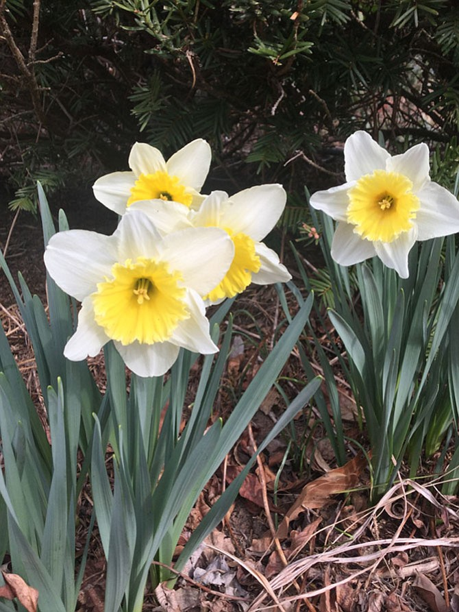 A mild winter has led to early plant blooming and an early allergy season.