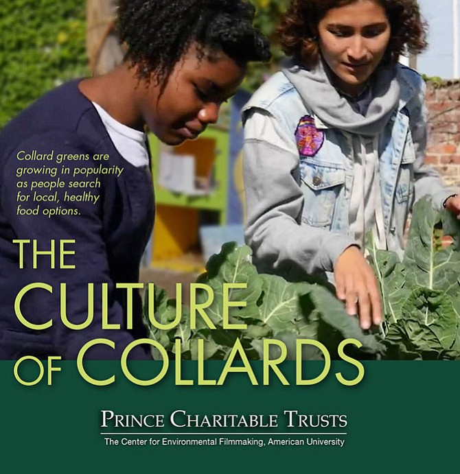 """The Culture of Collards"" by Vanina Harel of Washington, D.C., and Aditi Desai of Arlington."