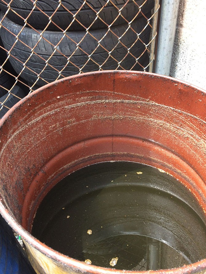Water sitting in tires and oil drums outside Red Top Cab's offices. The Asian tiger mosquito only breeds in standing water, not in swamps and ponds like other mosquitoes.