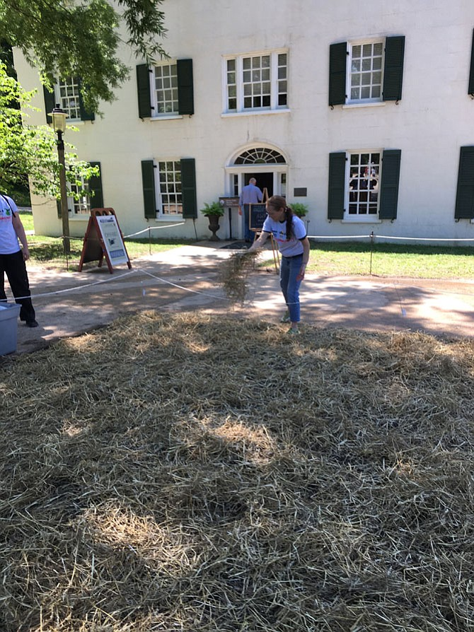 Robin Davitt spreads hay on new grass seed in front of Great Falls Tavern Saturday. She and others helped clean up around the Tavern during the 10th annual Canal Pride Day at C&O Canal National Historic Park.