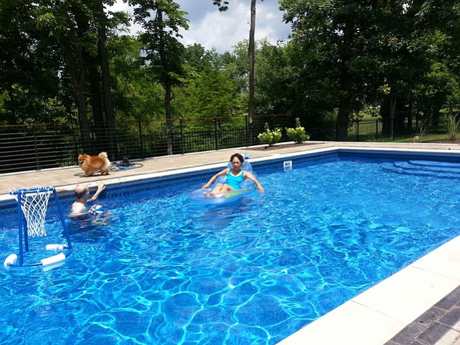Mary-Alice Cohen of Fairfax Station sent these pictures with her 'precious Pomeranian pet, Charlie.' He was too scared to join her in a friend's swimming pool.