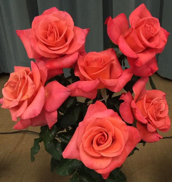 The Rose Display is Sunday, Oct. 15 from 2-4 p.m. at Merrifield Garden Center- Fair Oaks, 12101 Lee Highway, Fairfax. Arlington Rose Foundation hosts seminar on new and interesting roses for next year's garden. Free. Call 703-371-9351 or email arfinformation@aol.com.