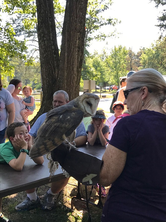 Since Lois Auer holds permits to possess non-releasable birds of prey for educational purposes, she provided live presentations to NatureFest 2017 goers. Auer explained owls have 14 vertebrae in their necks, which enable the creatures to turn their heads about ¾ of a full circle without moving their shoulders, essential since owls have large forward-facing eyes and can only look straight ahead.