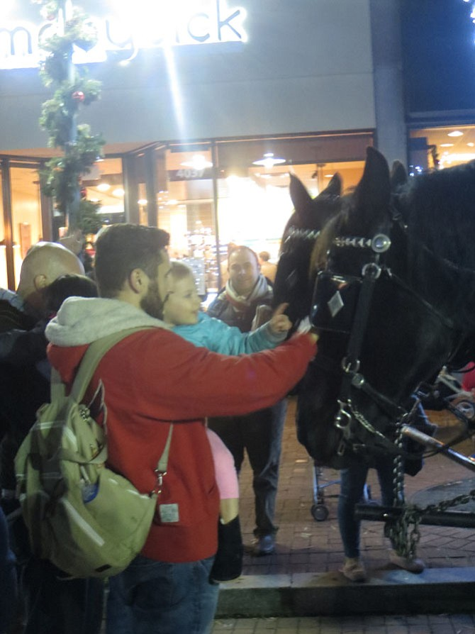 Families pet the horses pulling carriages.