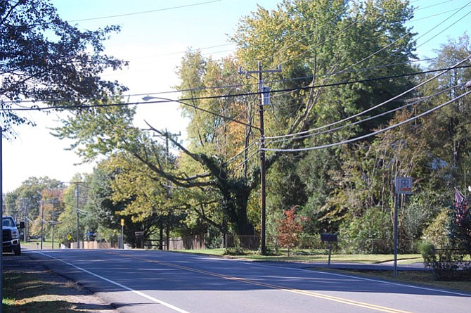 Fort Hunt Road south of the Beltway hosts multiple severely-pruned trees. This one is located between Wellington Road and Collingwood Road.