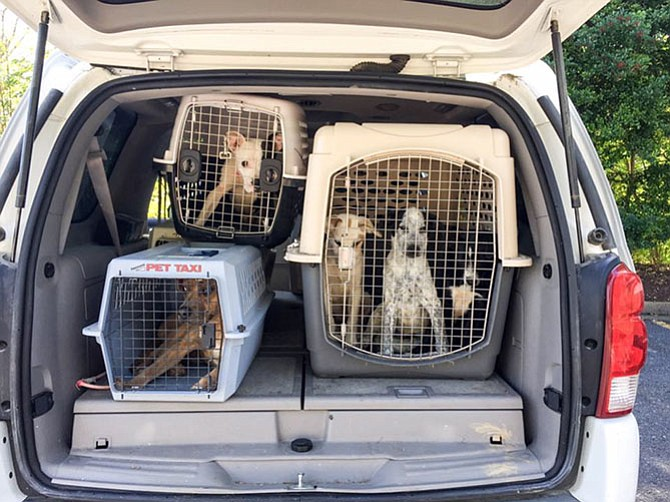 Dogs from the Galax, Va., area on their way to a new future in Alexandria.