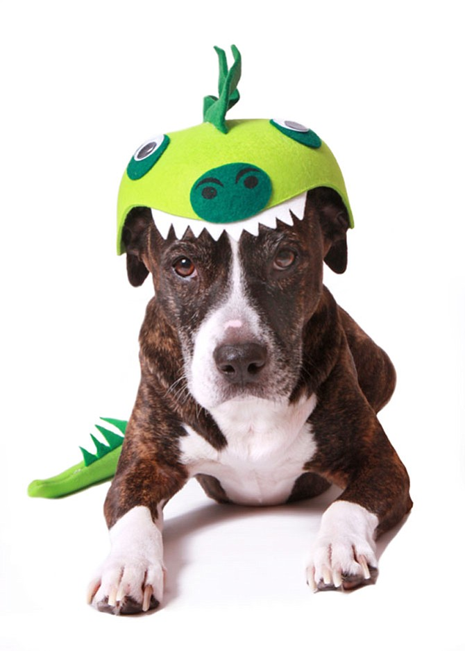 Zoey, Alexandria's 2018 Animal of the Year, looked fetching as an Irish green dragon.