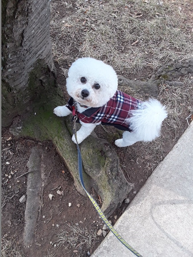 Tiki in his new plaid coat.