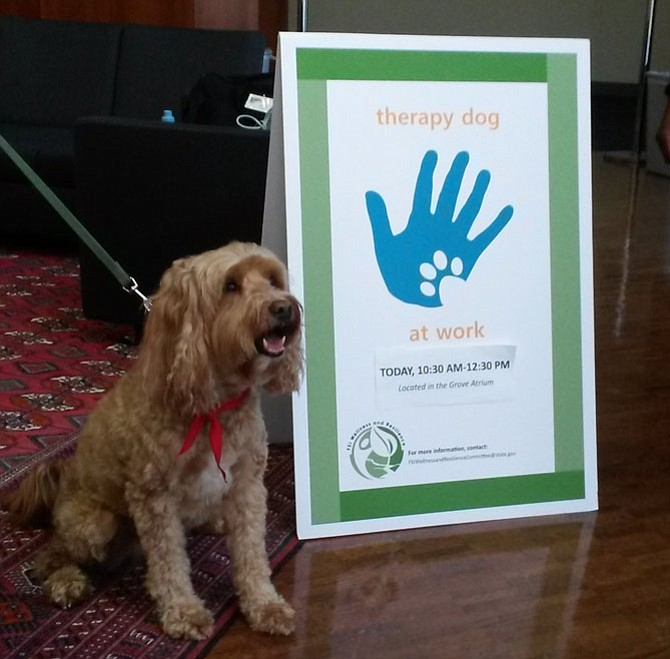 Chance at the Therapy Dog Program at the U.S. Department of State.