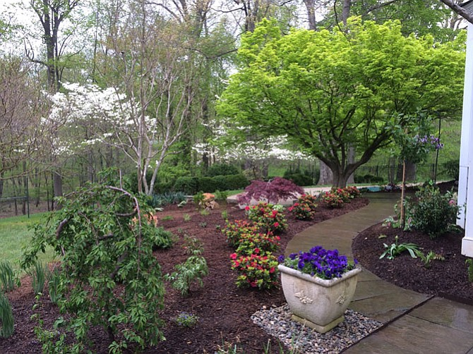 Preparing a spring garden includes pruning, mulching and fertilizing, says Haynes Davis of American Plant in Bethesda.