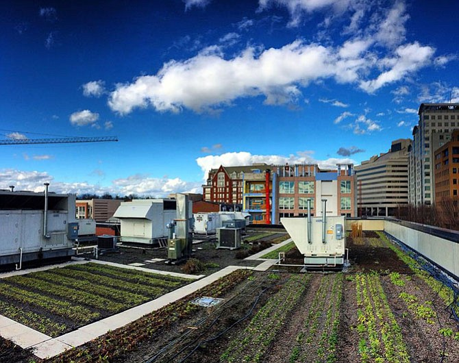 17,000 square feet of agriculture on the top of Pike & Rose residential buildings.