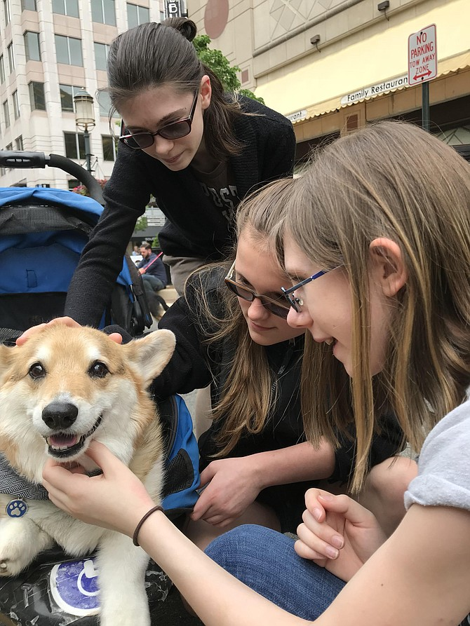 "(From left) Autumn, Michelle, and Bella Smith pet Tony-2-Toes, a Corgi owned by Amy Apple of Vienna. Apple explained she got her dog as a rescue 14 years ago. ""He's too old to walk far, so I bring him back here in his stroller,"" she said."