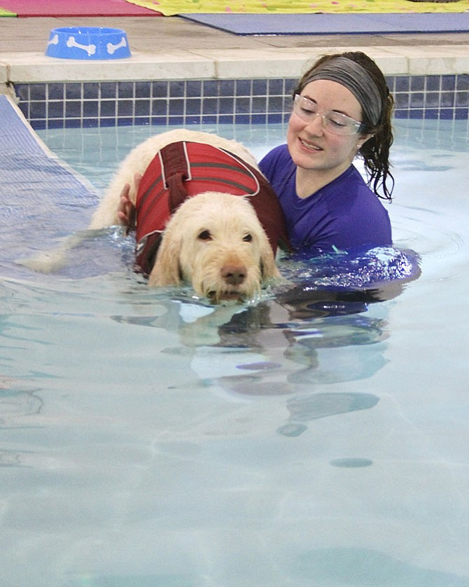 Carmella enters pool with the help of swim coach Erica Dale at the K9 Aquatic and Wellness Center.