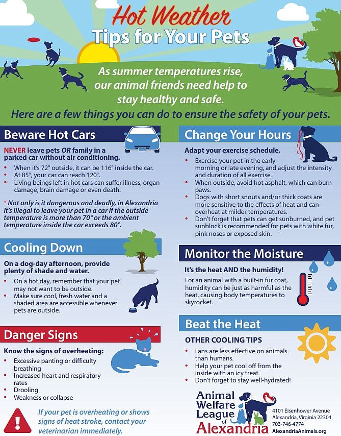 Guide to keeping pets safe in the heat.