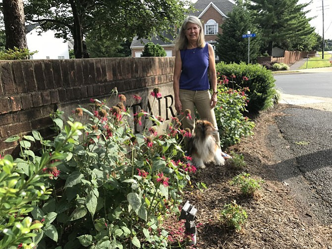 """Gwyn Whittaker, president of the Sycamore Ridge Homeowners Association in Oak Hill and her dog Duncan check on the native perennials the HOA planted last fall at the entrance to their development. """"It's a work in progress; an investment in long-term sustainability,"""" said Whittaker."""