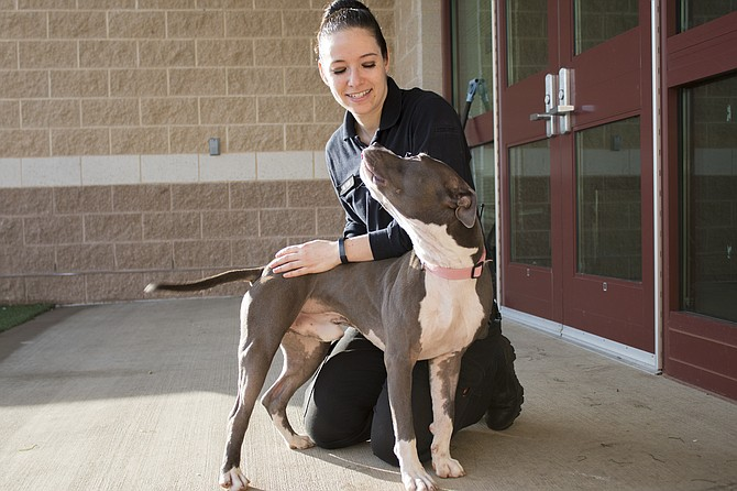 Volunteers and staff work with animals at the Montgomery County Animal Services and Adoption Center.