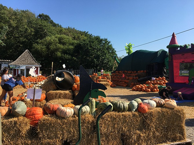 There are plenty of things to do at Meadows Farms' Fall Festival at their Great Falls location.