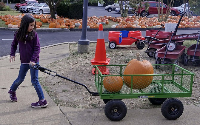 Lucy Tran loads up her wagon and hauls her two pumpkins to the car.