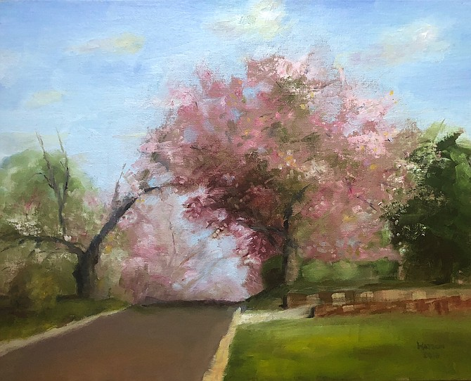 Cherry Blossoms Just after Peak by Geoff Watson.