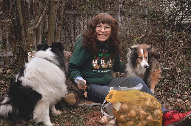 "Marcia Wines and Busia Bear plant daffodils with the help of her two Shelties, (from left) Mr. Peabody and Shamrock. ""The daffodils will bloom in the springtime of our retirement,"" wrote Wines."