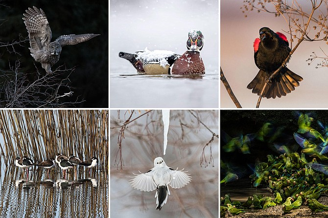 A selection of the 2018 Audubon Photography Award Winners.