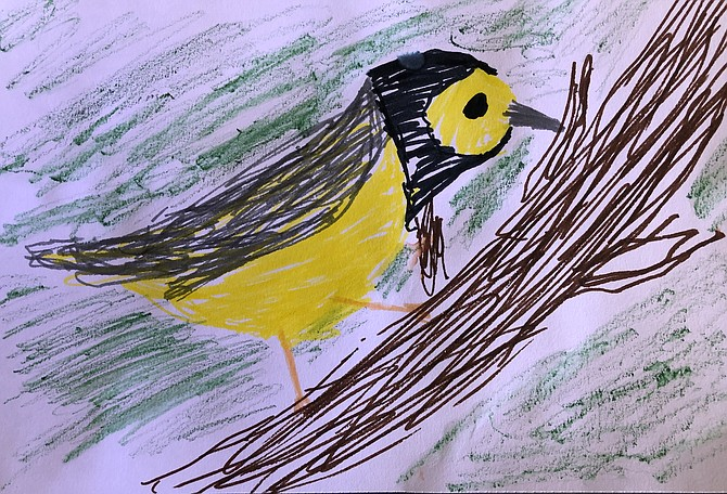 Drawing of Hooded Warbler by Caroline Lehman, 3rd grade.