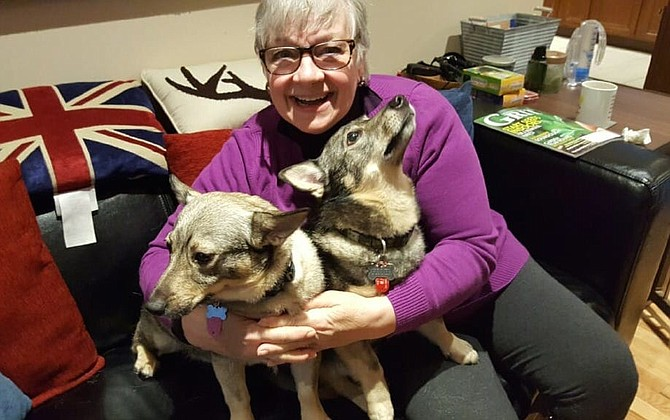 "Grandpups with Swedish Roots: Shirley Edwards of Springfield writes: ""Gunner and Ammo are my Swedish Vallhund grandpups. Their breed originates in Sweden where they were used as herding dogs by the Vikings. In this photo, I have 'herded' them in my arms for a big hug. When they visit me, I hear their happy barks as they arrive at my front door. They enjoy scattering all their toys from their toy basket to find their favorite small, white stuffed poodle. Gunner and Ammo's herding skills are only evident when they rush to knock all the throw pillows from my sofa and push them together in a big pillow pile."""