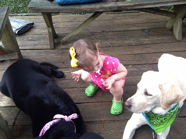 Parsley and Tilly: Can you give me some guidance? Guiding Eyes for the Blind canines Parsley and Tilly with 1-year-old Katia on the dock. — Ann Vernon