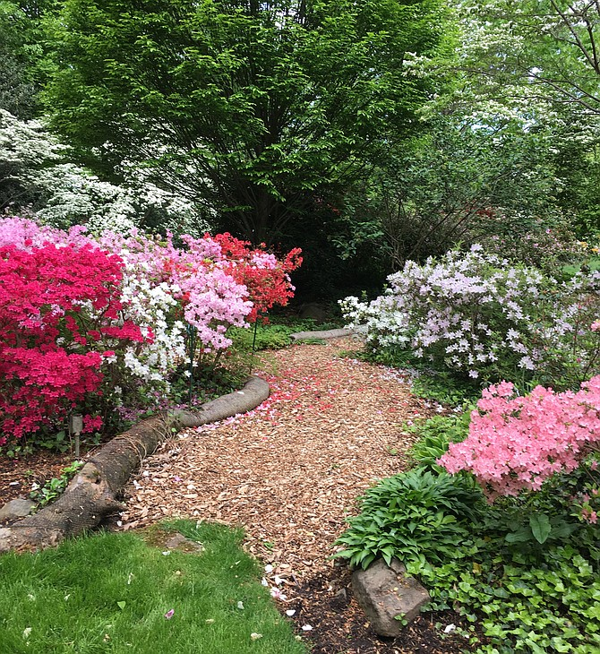 The two-and-one-half acre Perkins Memorial Garden at Landon School will be Open May 3–5 during the school's annual Azalea Garden Festival.