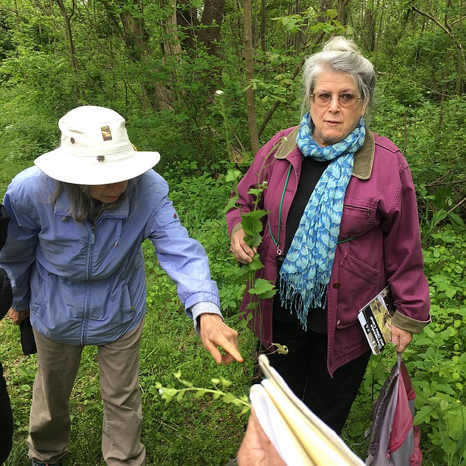 Members of Potomac Community Village and guests gathered at Violettes Lock on the C&O Canal for a wildflower walk led by member Ginny Barnes.