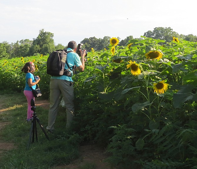 Photographers, families, birders and nature lovers of many kinds flocked to the sunflower fields at McKee Beshers Wildlife Management Area off River Road.