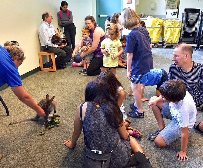 On Saturday, some Potomac Library patrons got to meet Dumpling the kangaroo and Rocket the wallaby, learning about what they eat and where and how they live, with Roos2U.