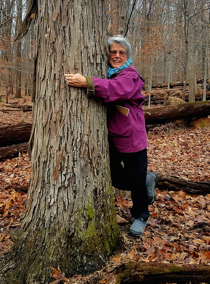 Ginny Barnes on the New Year's Day walk at Blockhouse Point hugging tree friend, a Shagbark Hickory.