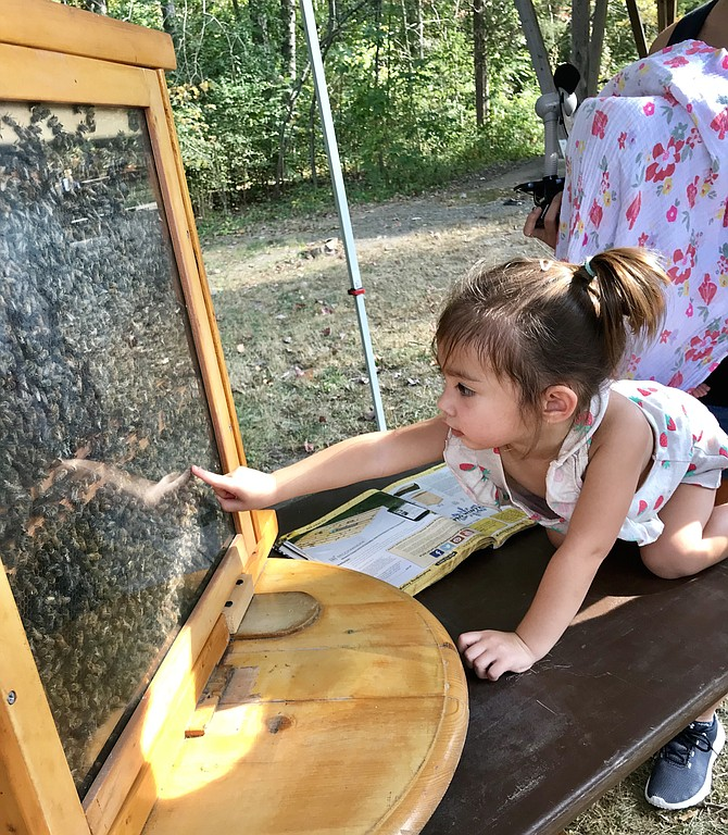 Layla Kenny, 2, checks out life inside a beehive at NatureFest 2019, a Town of Herndon partnership with the nonprofit organization, Friends of Runnymede Park.