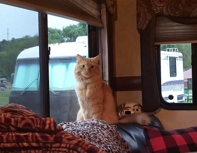 Ranger's window on the world, his favorite spot in the Taylors' camper.