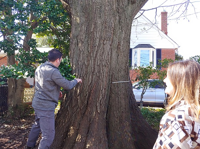 Steve Nagy measures the Water Oak tree as Patricia Teutsch looks on at her home on 35th Street N.