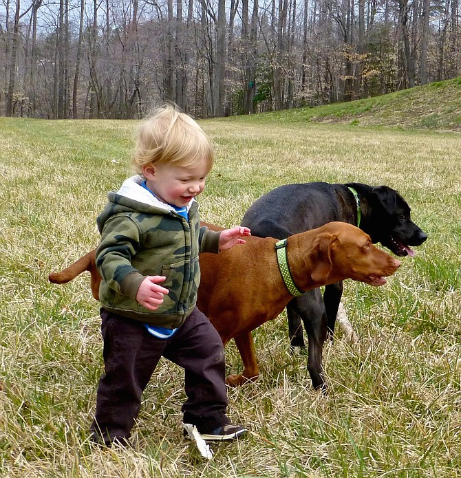 Robert Reed enjoys the company and a walking assist from canine friends.