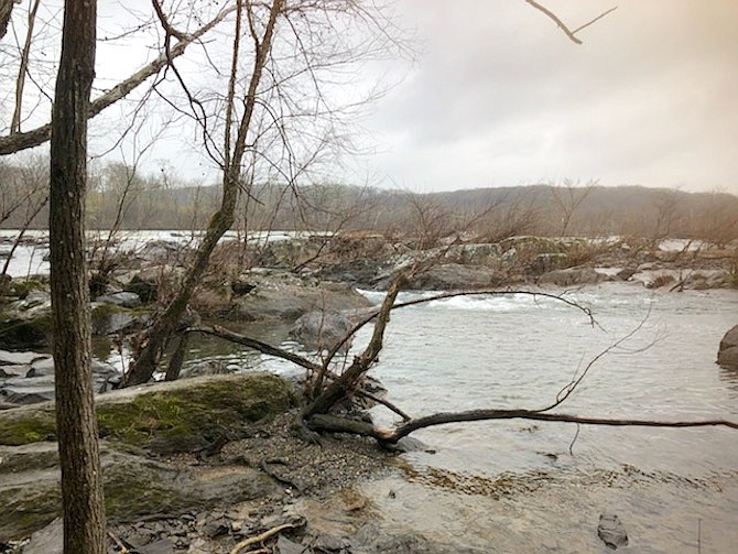 Local trails at Riverbend Park and Scott's Run Nature Preserve are a sample of the 330  miles of local trails under the Fairfax County Park Authority. While parks remain closed during the pandemic, the local trails remain open.