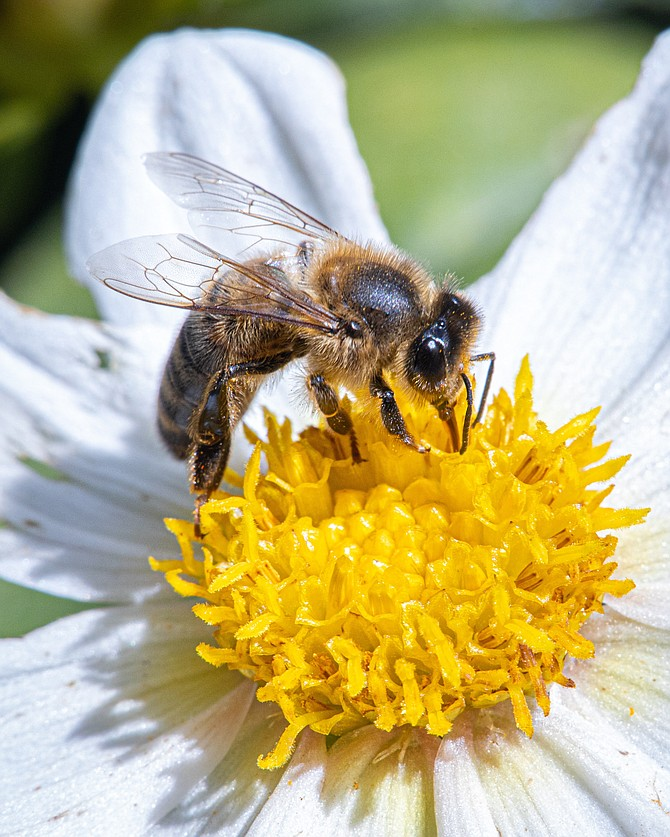 Bees are just one of the pollinators needed for the foods we eat.