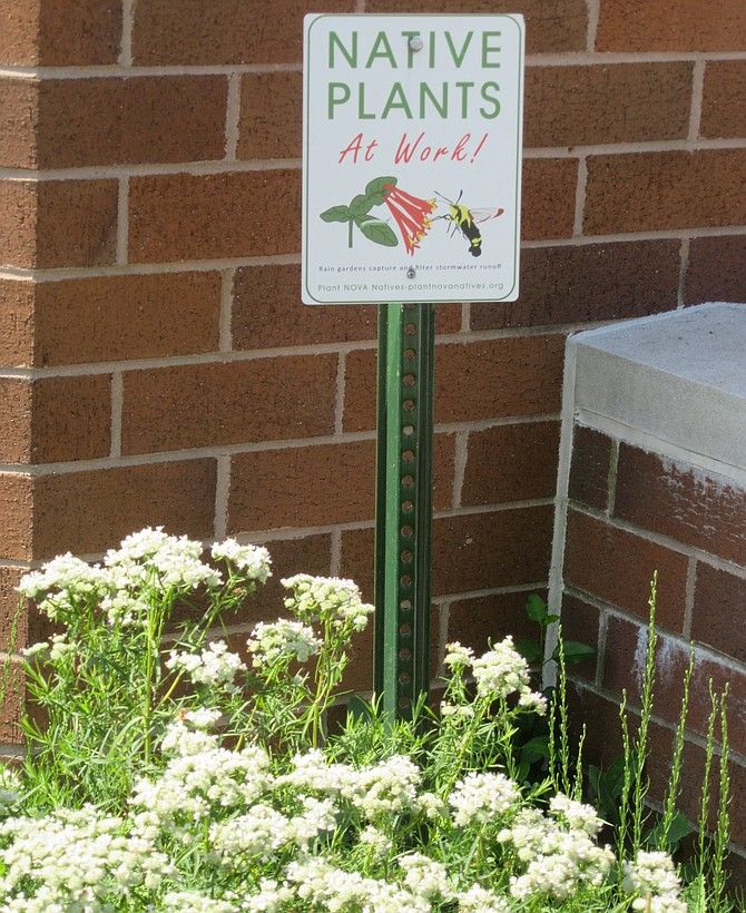 Volunteers installed native plants at the Mount Vernon Government Center as part of a natural landscaping project.