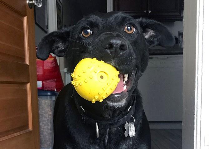 Mona Leasha: See, I know how to go get the ball!
