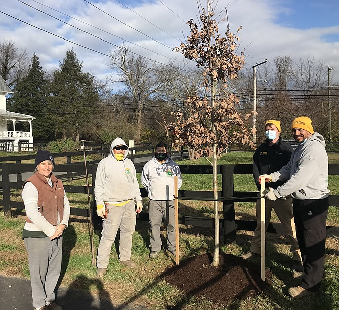 (From left) Resident curator Sarah Kirk looks on as Rossen Landscape employees plant a white oak  at Turner Farm on Wednesday, Nov.18, gifted by the Great Falls Citizens Association.