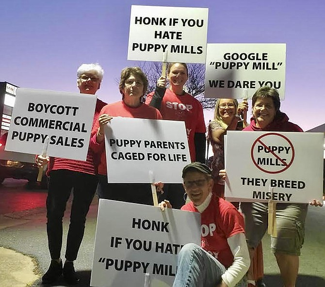 Animal activists picket one of Virginia's only 18 puppy stores.