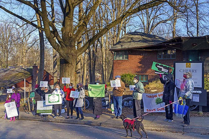 Neighbors protest planned destruction of 40-year-old Willow Oak on Utah Street.