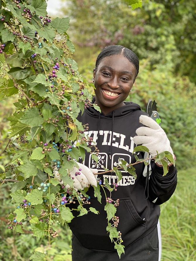 Volunteer Michelle Baidoo removing invasive porcelain berry vines at Laurel Hill Park. The Virginia House and Senate just passed a resolution on invasive plant species proposed by Del. David Bulova and supported by Sen. Dave Marsden.
