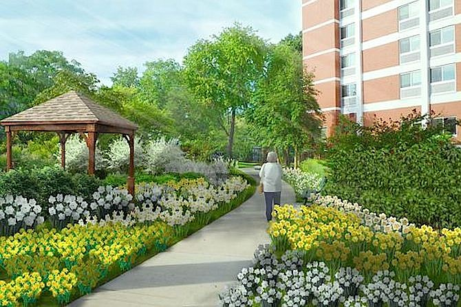 Rendering of architect's drawing for the new Culpepper Garden dream daffodil garden.