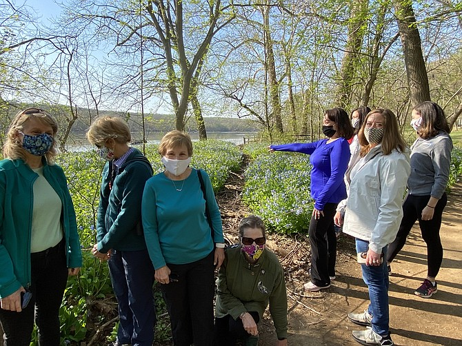 Ticket holders for the Virginia Bluebells & Bald Eagle Tour produced by the Great Falls Friends and Neighbors Philanthropy Group stop to admire the perennials' blossoms on the morning of April 7.