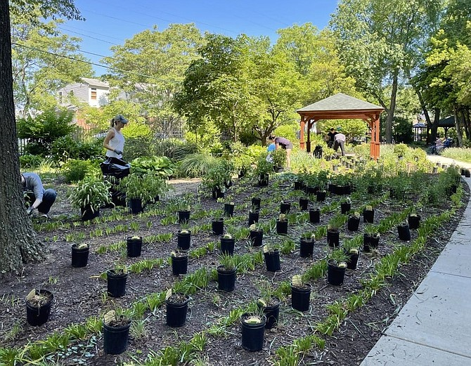 Volunteers from Sycamore School, McLean Bible Church and others help plant Virginia native plants for the new Culpepper Garden community garden on May 15.